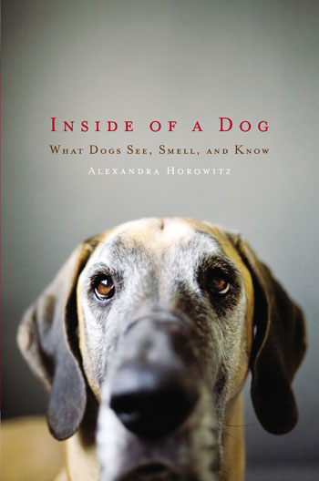Inside-of-a-Dog